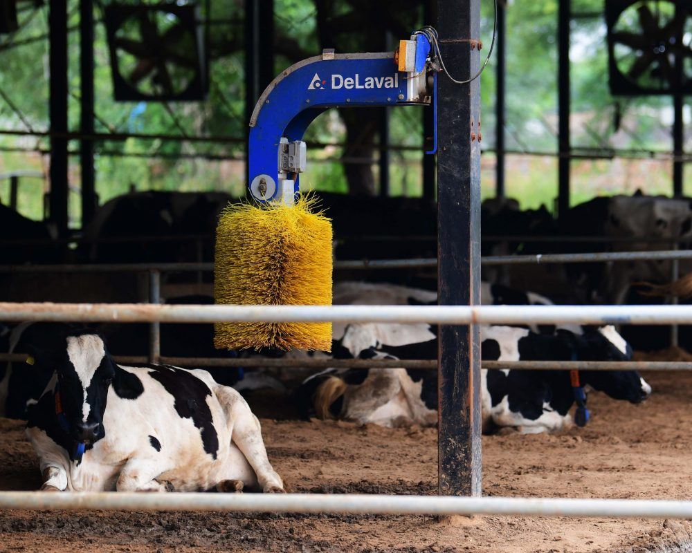 Cow Comfort Cleaning Brush in farm